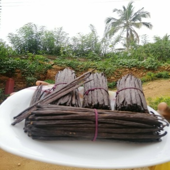 Buy Madagascar Vanilla Beans in Bulk at Wholesale price.