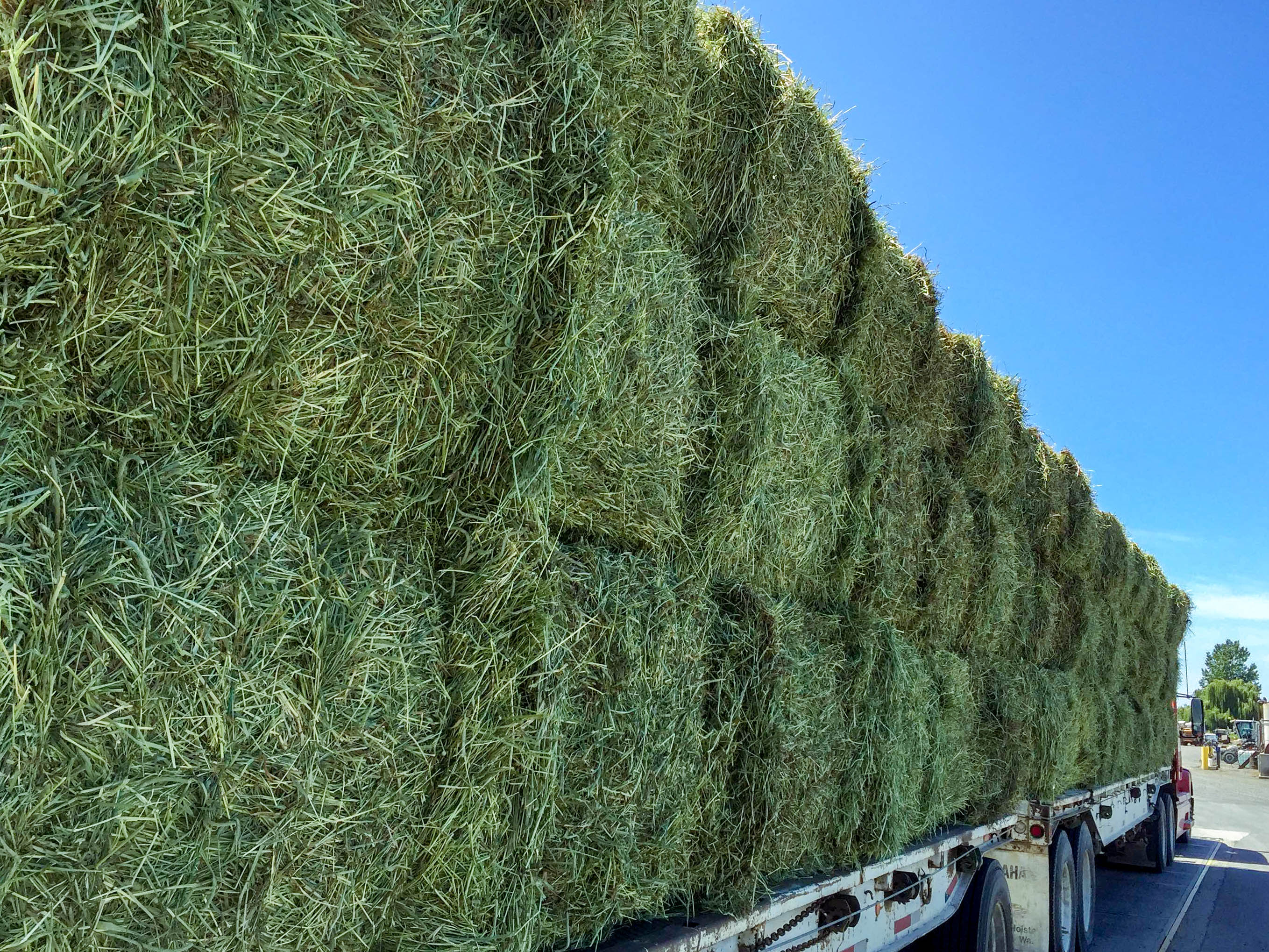Wholesale Price Alfalfa Hay Dehydrated Alfalfa cubes ready for Export