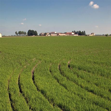 1000 кг суши промышленных рисовая дж. Верди выбор в итальянском стиле итальянского производства риса для промышленного использования для суши