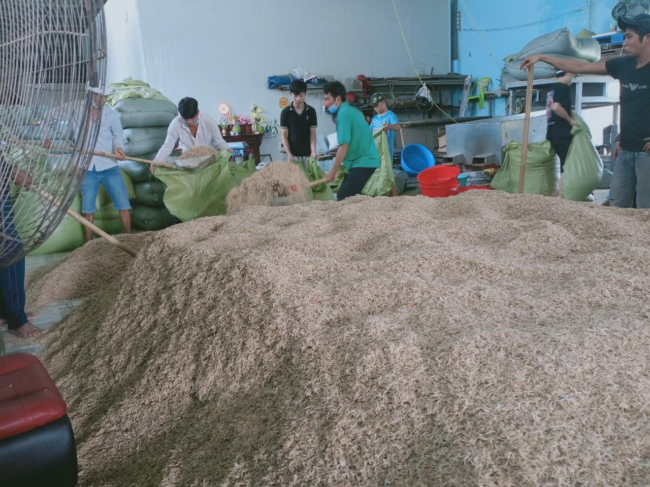Свежие соленые Детские креветки лучшего качества из Вьетнама