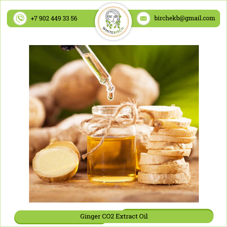Buy Wholesale Deal Ginger Extract Oil
