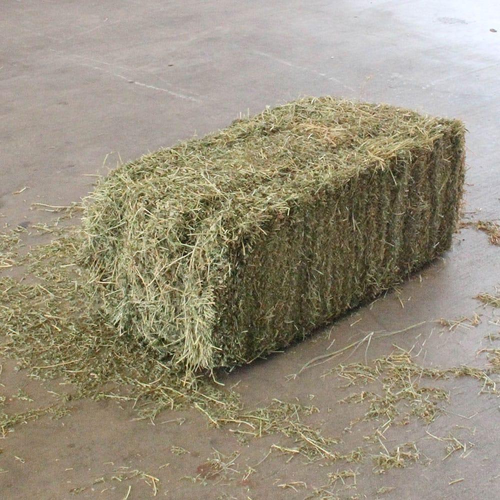 Premium Quality Alfafa Hay for Animal Feeding Stuff Alfalfa / Alfalfa Ha