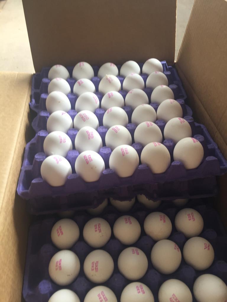 Яйца от крупнейшего производителя и экспортера турецкой компании