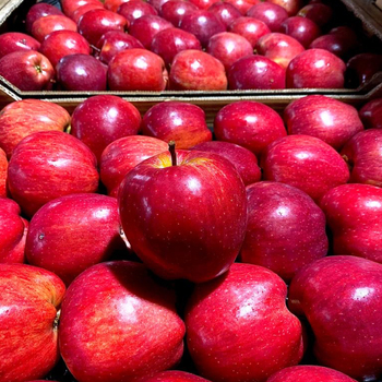 Premium Quality Fresh Delicious Red & Green Apple