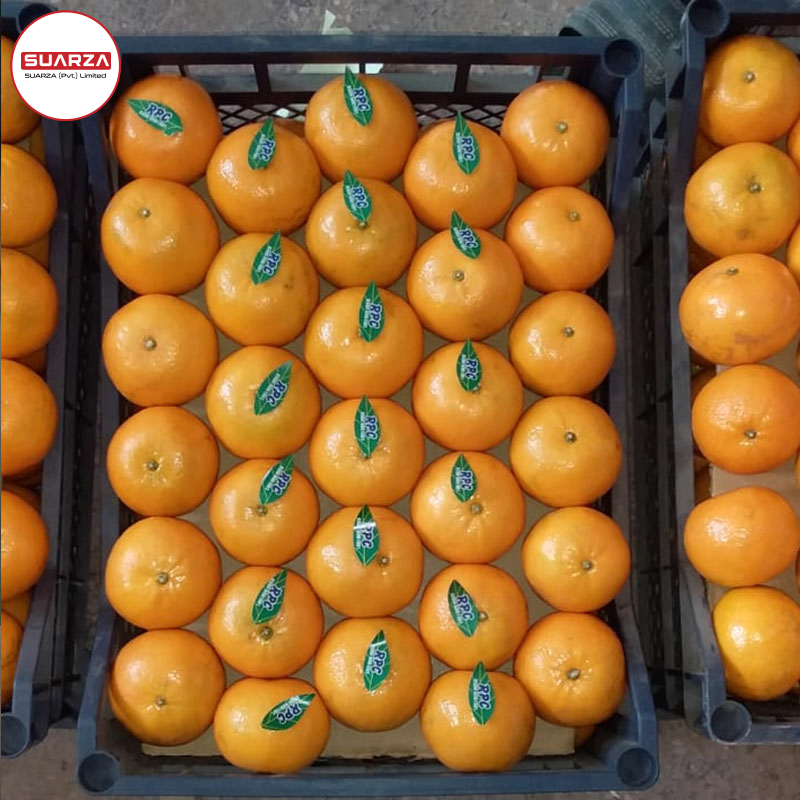 Valencia Fresh Orange Fresh Fruits/ /Navel Oranges, valencia, Mandarin, Tangerine, Lemons, Clementine, citrus fruits