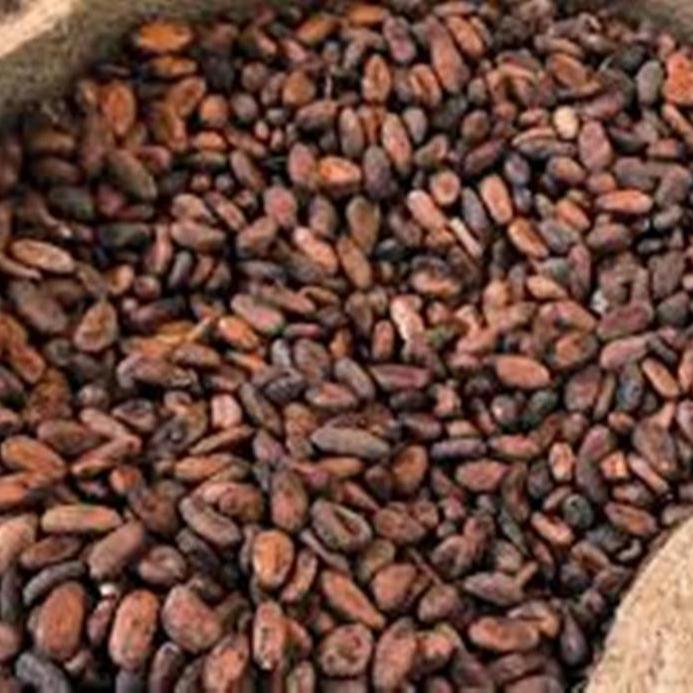 100% Высококачественные какао бобы для продажи