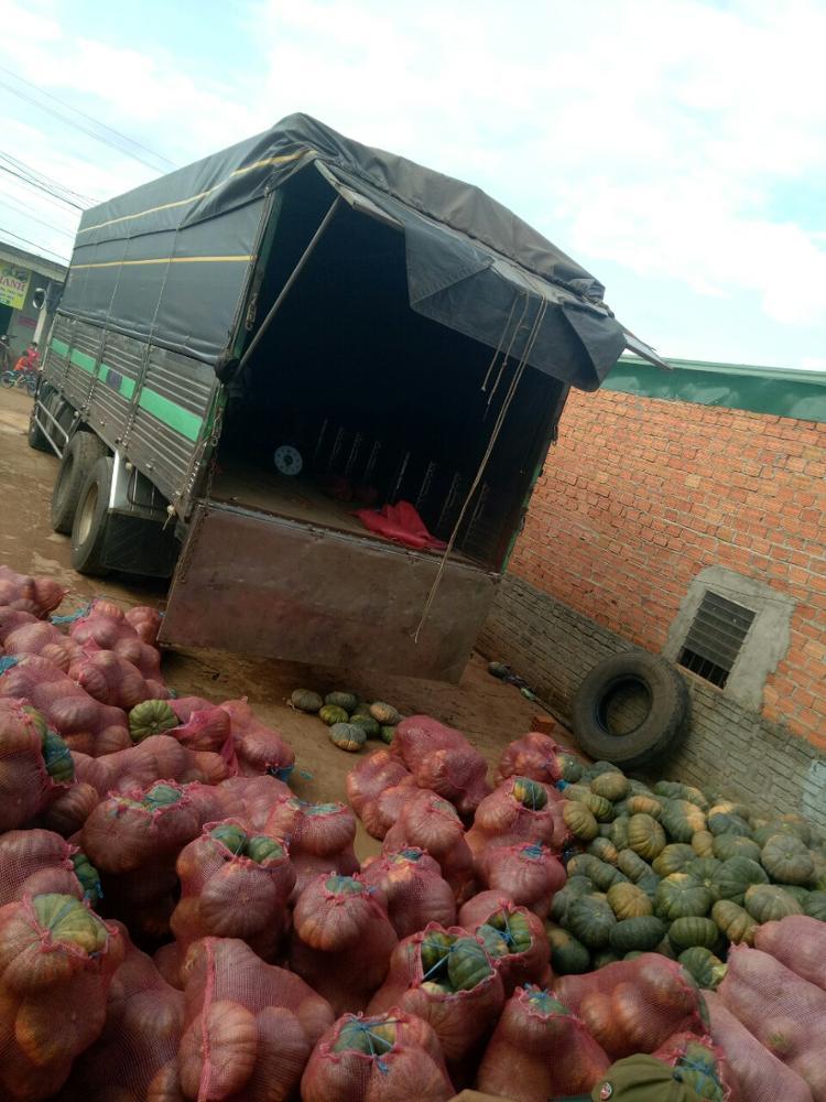 Best Fresh Pumpkin- Good Tasty- Good Quality for export 2020