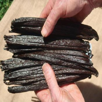 Buy Vanilla Beans - Bulk - Wholesale - !!!!