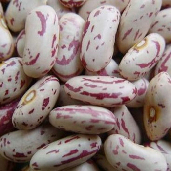 Light Speckled Kidney Beans - Long Grain Sweet Beans Sugar Beans