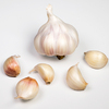 /product-detail/fresh-natural-white-garlic-2020-harvest-top-quality-garlic--62009874047.html