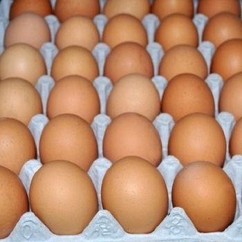Bulk Farm Chicken Eggs Export nation wide