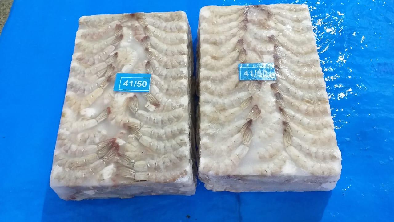 Frozen Vannamei Shrimps Headless Shell ON (HLSO)  Good Export Price