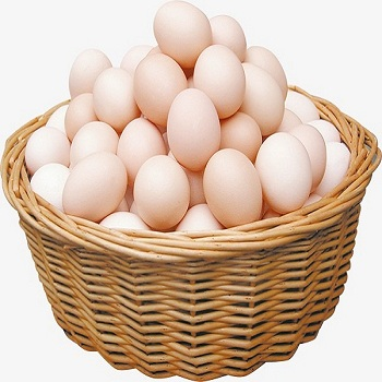 Fresh Chicken Brown & White Table Eggs for export