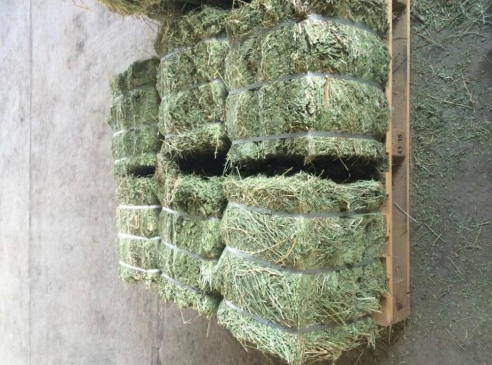 Alfalfa Hay  Rhodes Grass Oats Hay Ready Oats Hay