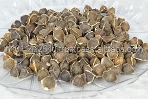 Moringa Seeds India Suppliers