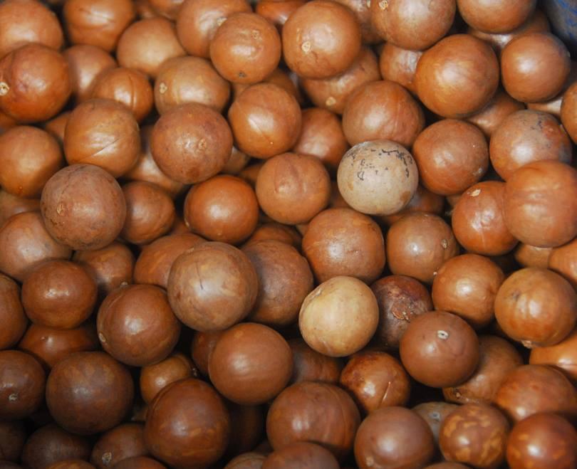 Орехи макадамии в скорлупе