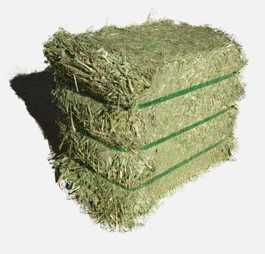 Alfalfa Hay,Lucerne Hay,Alfalfa Hay Cubes And Bales - Buy Alfalfa Hay Bales  For Sale,Timothy Hay Bales,Lucerne Hay For Sale Product on Alibaba.com