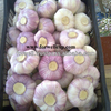/product-detail/price-special-garlic-best-quality-garlic-red-white-garlic-136842868.html