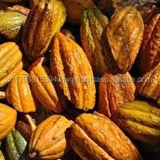 Высококачественные сушеные какао бобы для продажи