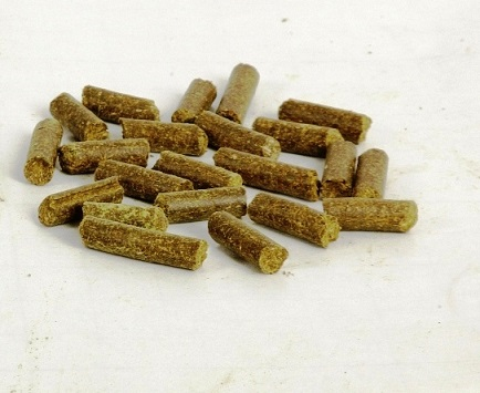 Organic Moringa Oleifera Fish Food