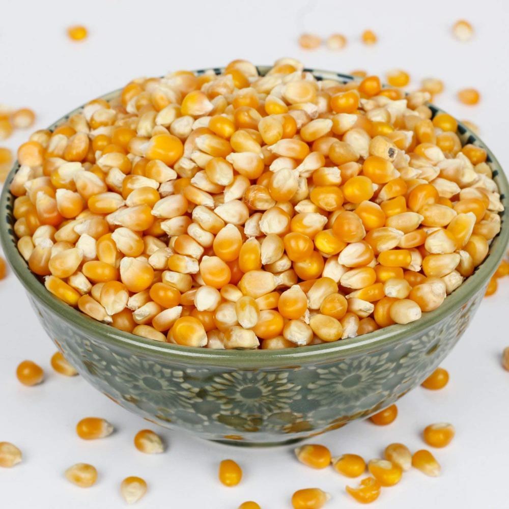 أفضل سعر ل الحيوانات و الطيور تغذية الهندي ذرة صفراء Buy Animal Feed Maize Poultry Feed Corn Dried Maize Product On Alibaba Com