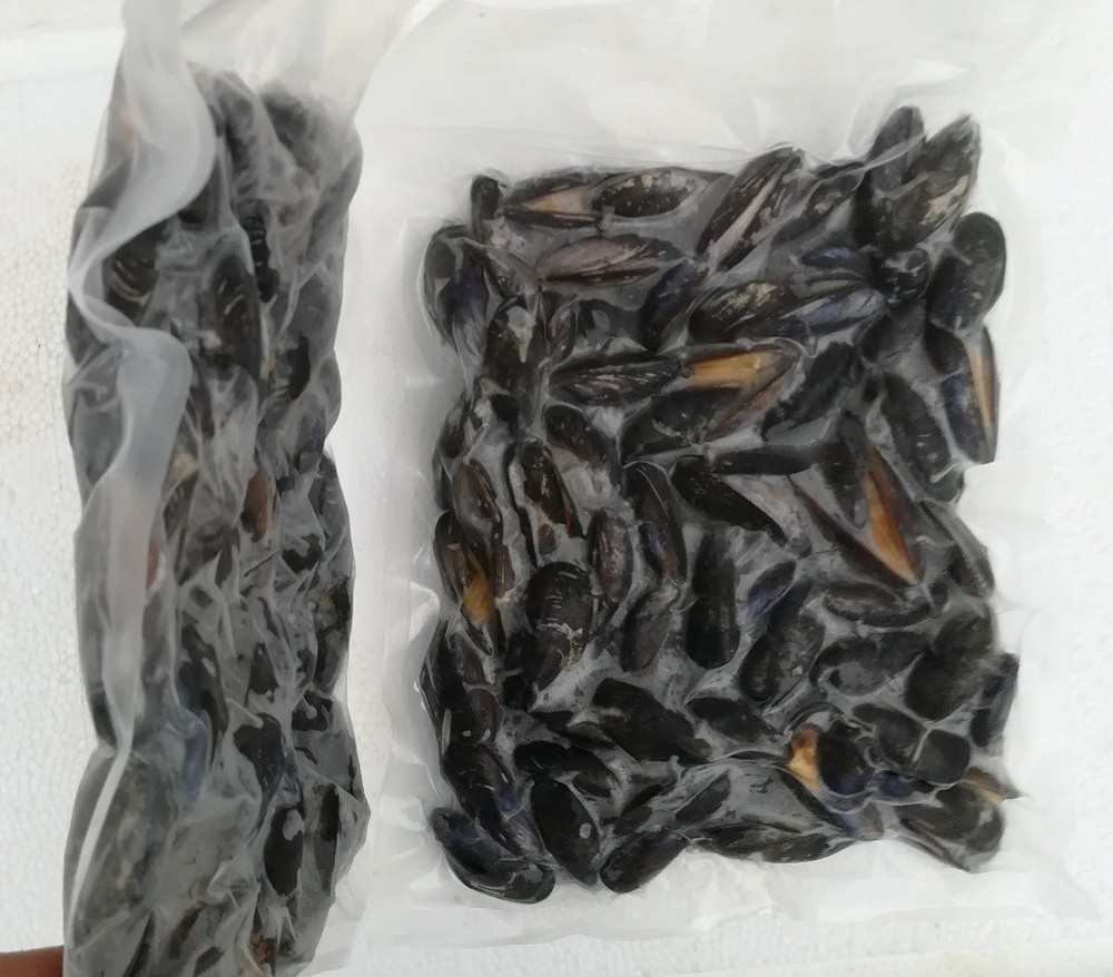 Русская половина ракушки, мишура, мясо, замороженные моллюски
