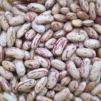 Light Speckled Kidney Beans /Pinto Beans/Sugar Beans for sale