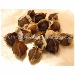 Drumstick Seeds Suppliers