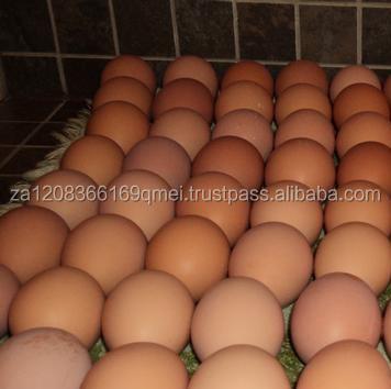 Свежие коричневые и белые куриные яйца из Южной Африки