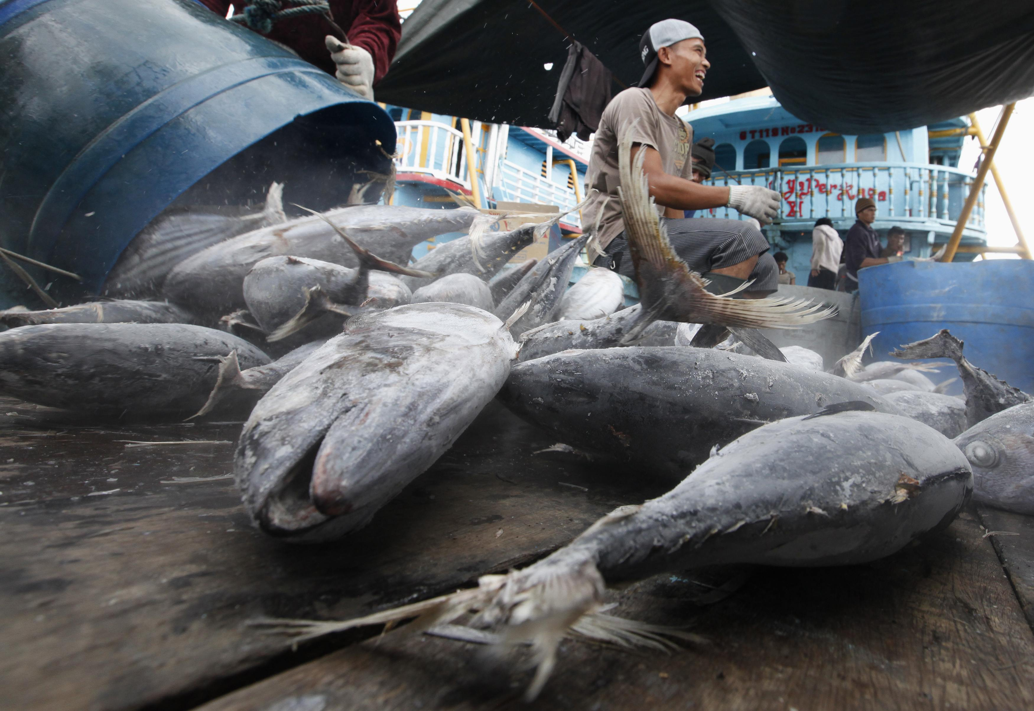 Seafood Product Frozen Black Tilapia Fish