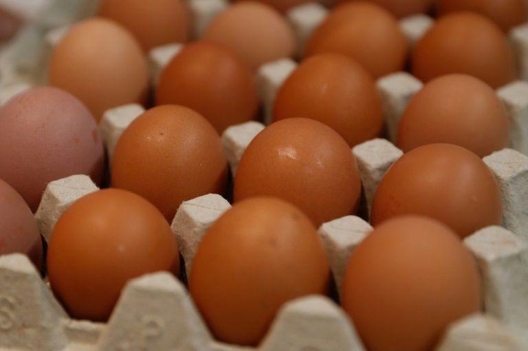 Свежие куриные яйца на ферме