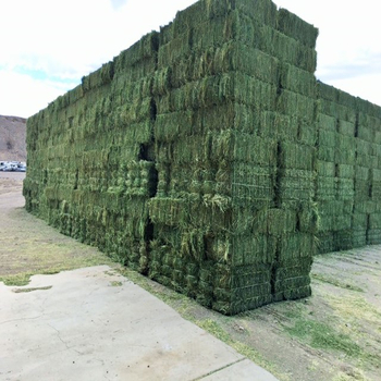 Продается сено из Тимоти/альфафа в тюках