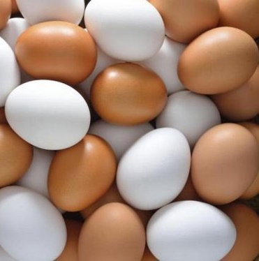 Лучшее качество, органические куриные настольные яйца и удобрённые инкубационные яйца