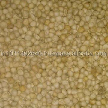 Moringa seed kernals