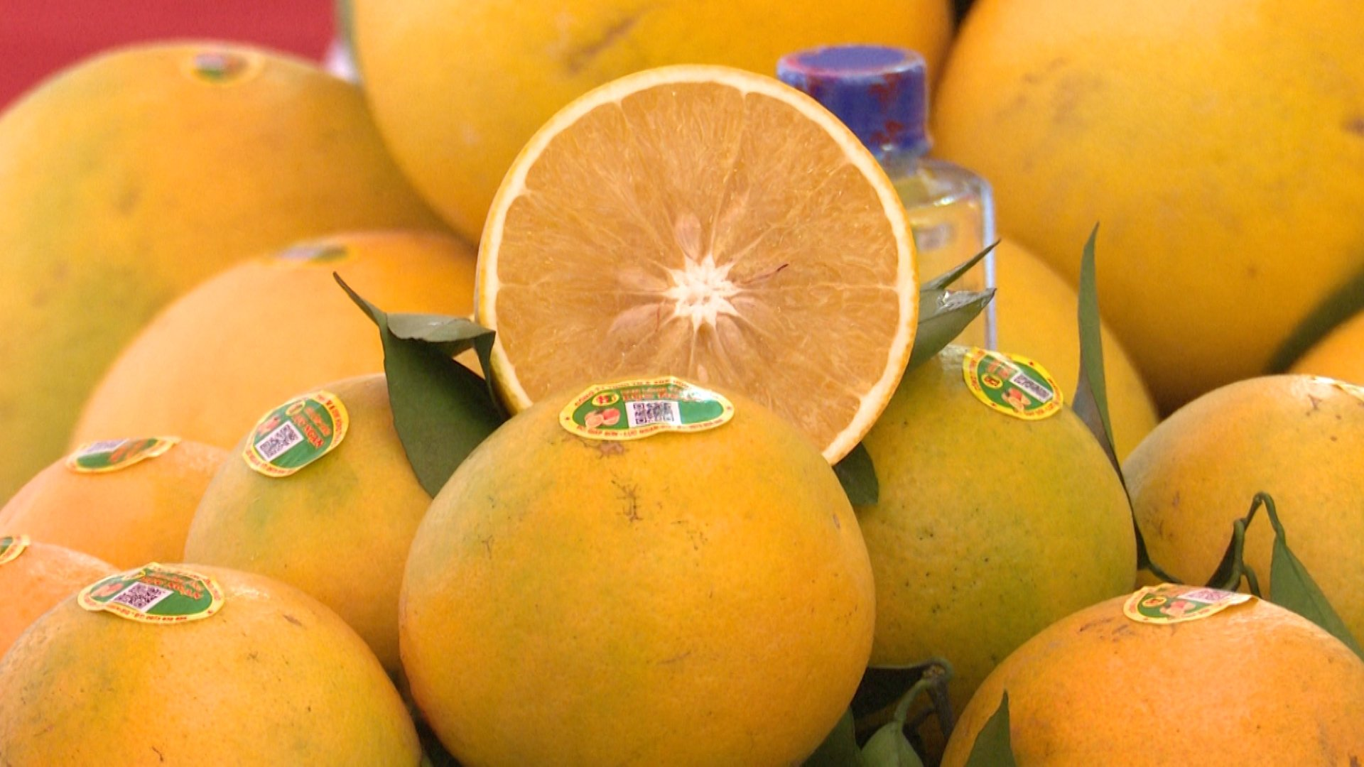 High Quality Wholesale Special Cuisine Organic Orange From Vietnam