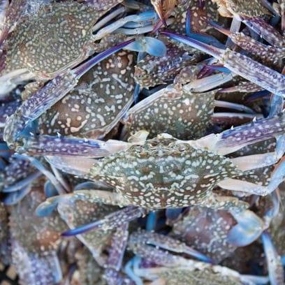 Живой синий краб, оптовая продажа, замороженный синий плавающий краб