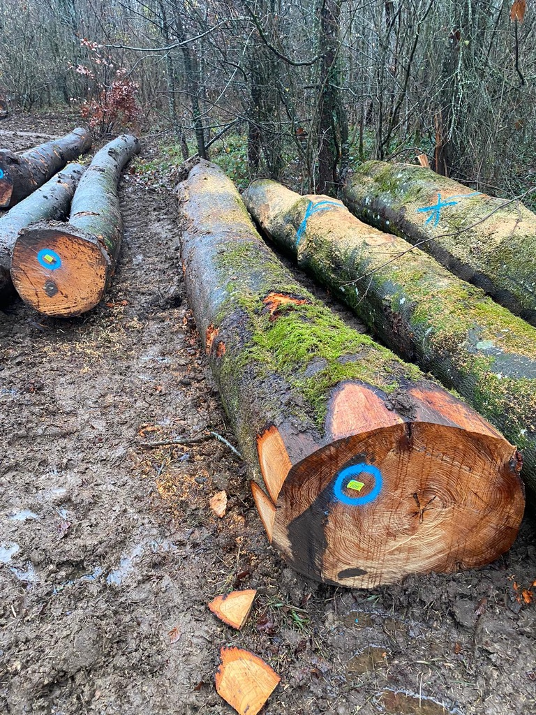 sawn timber near me for sale