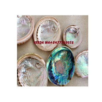 Polished natural abalone shell flashy large abalone shells - Paua abalone shell (WS0084587176063