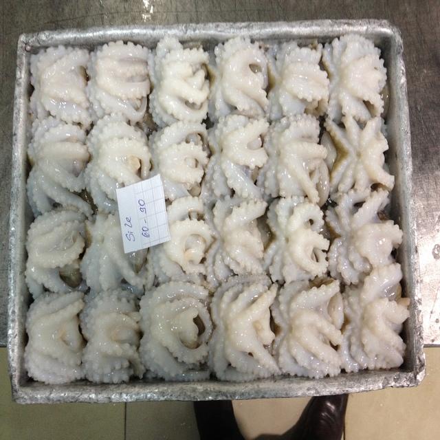 Frozen Baby Octopus/Baby Octopus in Viet Nam- good quality
