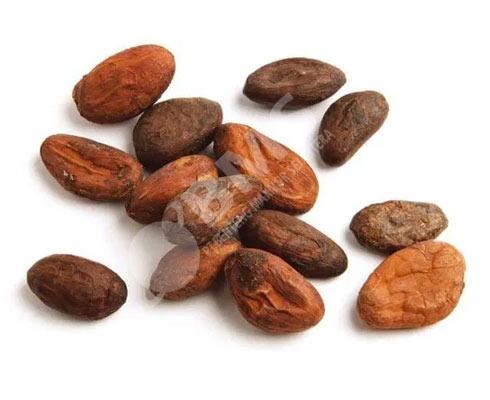 Высококачественные какао бобы