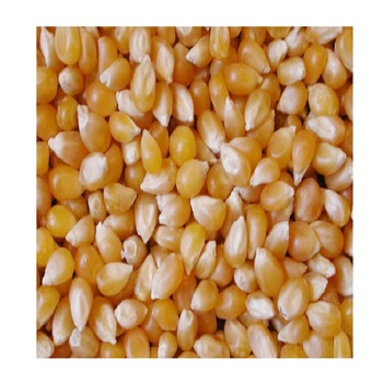 Vietnamese Yellow Corn Best Price Wholesale - Vietnam Maize export to Korea, Japan, UAE, etc - yellow corn for animal feed