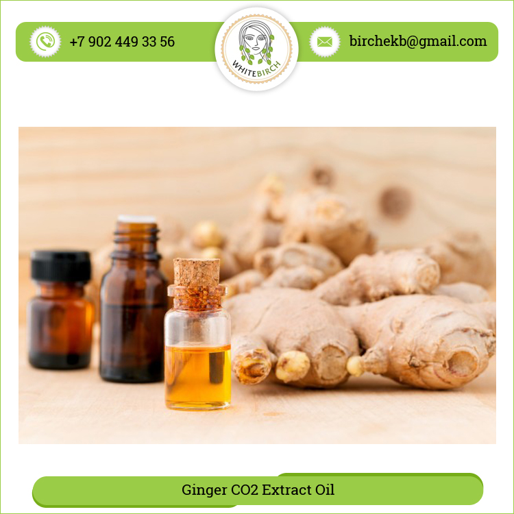 Biggest Exporter of Russia Ginger Extract Oil for Different Use