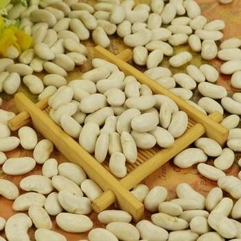 Bulk Wholesale Lima Beans Big size white kidney beans